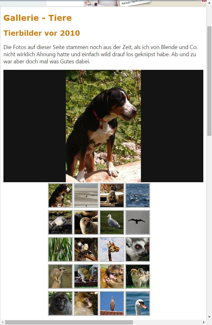 flickr-Bilder auf der eigenen Homepage